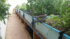 Some of the grow beds...