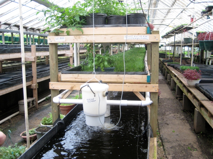 Aquaponics_at_Growing_Power,_Milwaukee